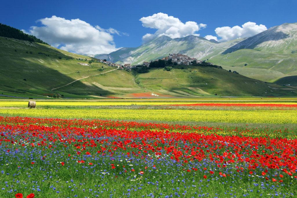 La Piana di Castelluccio di Norcia in fiore