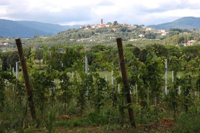 Montecarlo di Toscana è famosa per il vino la Strada del vino e dell'olio di Lucca
