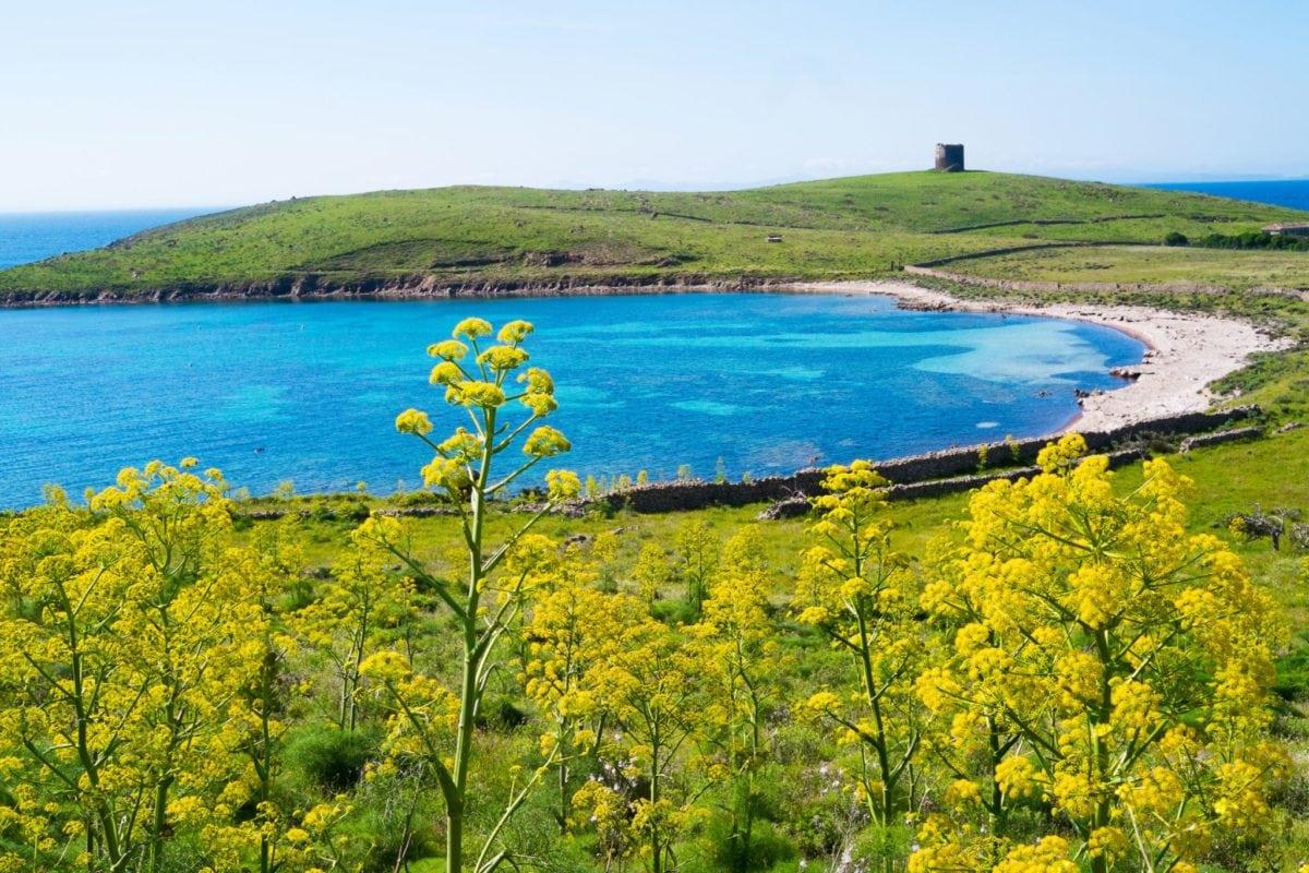 Parco Nazionale Asinara vuoto a buon rendere