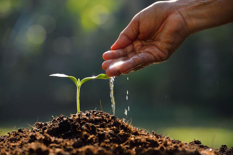 Confagricoltura: i vincitori del bando Agricoltura Sociale - InformaCibo