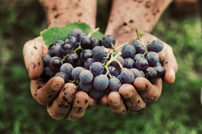 prodotti-tipici-vini-siciliani.