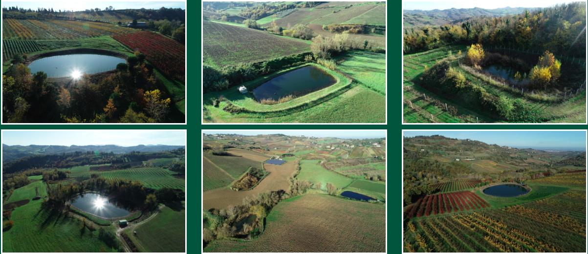 Alcuni dei laghetti aziendali Guidi, che salvaguardano fauna e flora locali