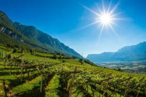 Mazon Sommer Landschaft Kirche Weinreihen-5139