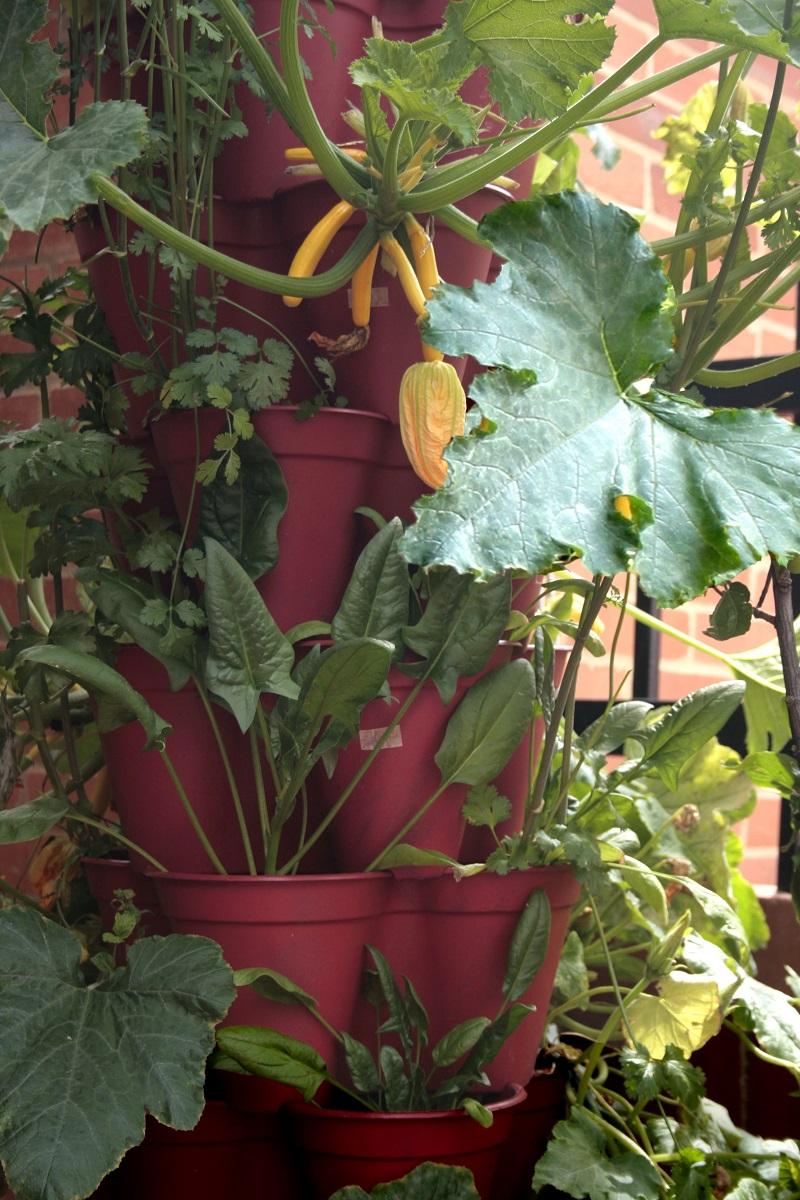 urban farming orto a casa