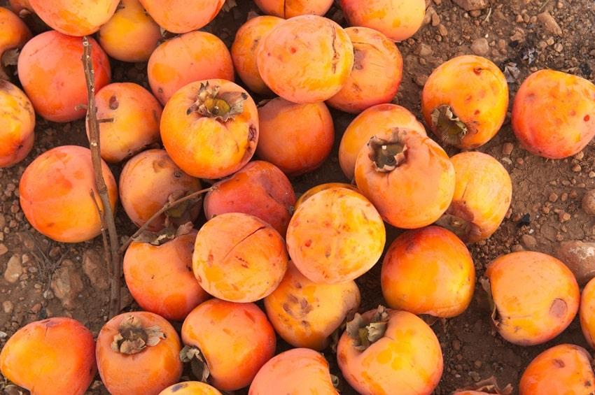 prodotti di stagione autunno cachi