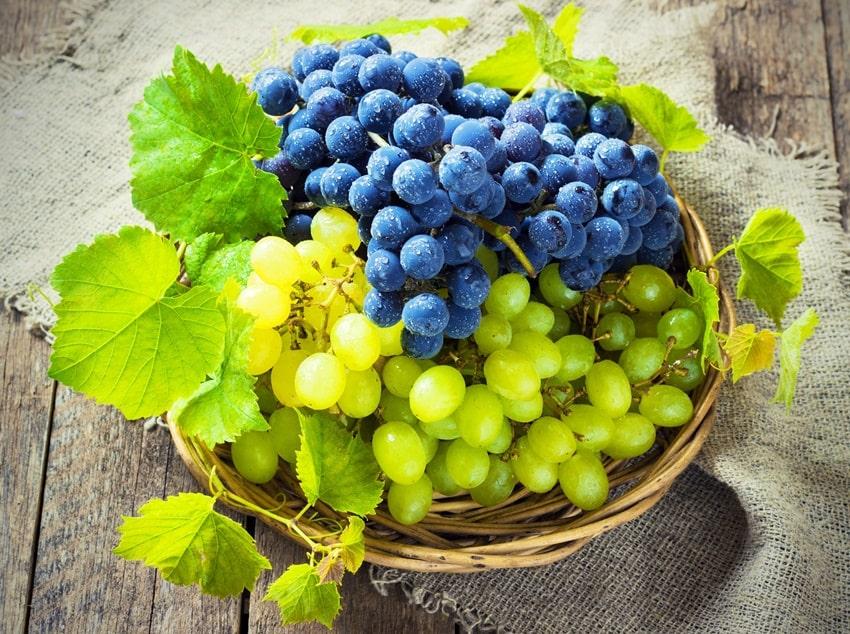 prodotti di stagione autunno uva