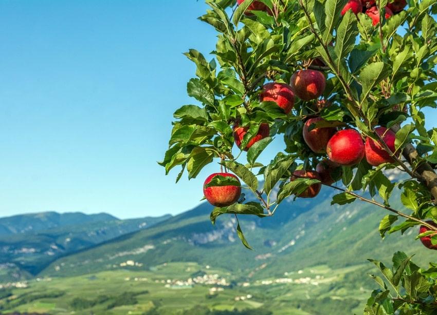 prodotti tipici trentino mele val di Non