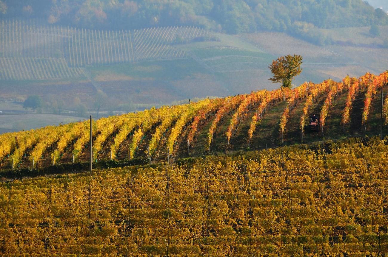 territorio del Monferrato