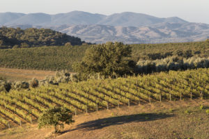 montecucco vino i vitigni