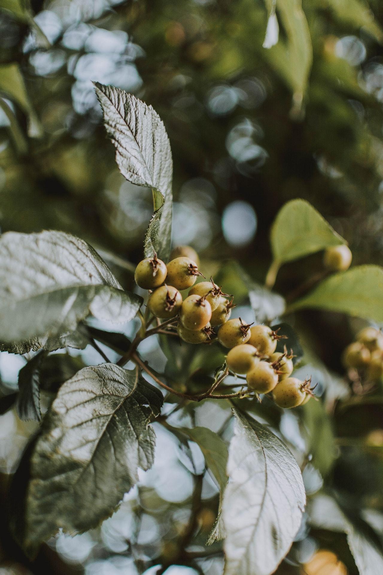 piante selvatiche