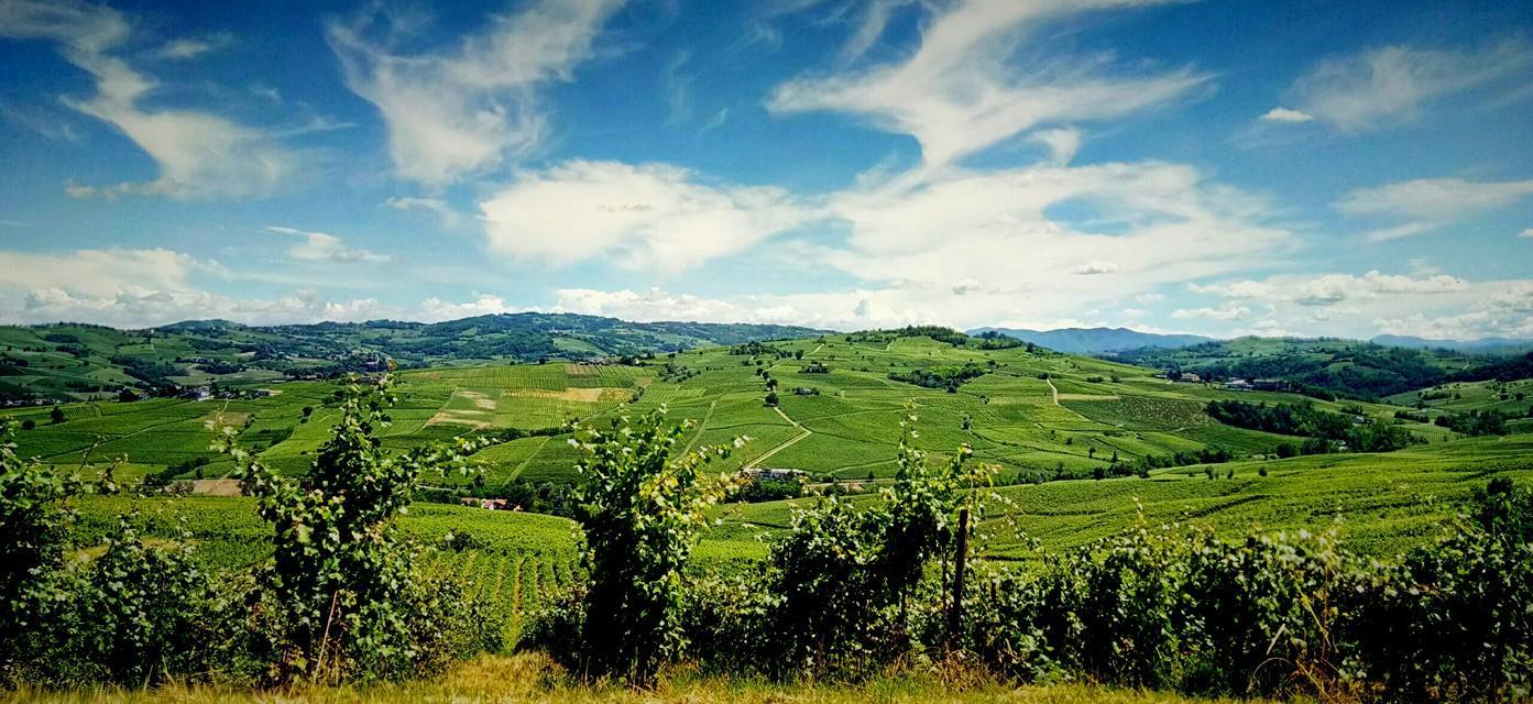 Strada del vino Oltrepò Pavese