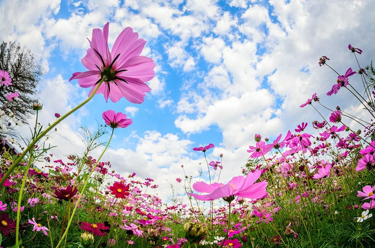 giornata-mondiale-delle-api-fiori
