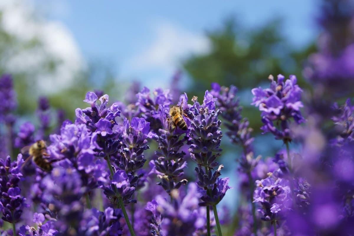 giornata-mondiale-delle-api