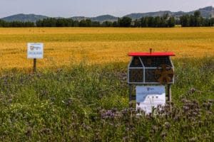 mulino delle api