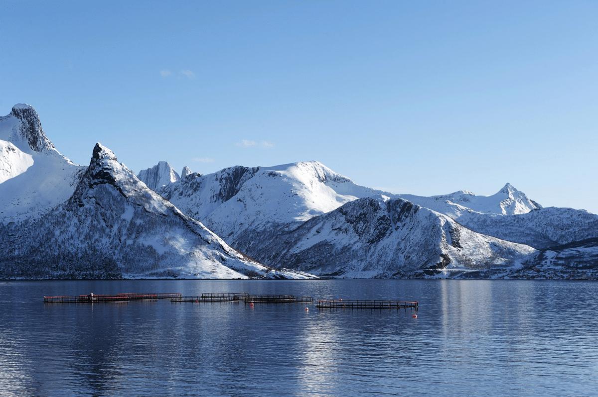 salmone-norvegese-allevamento