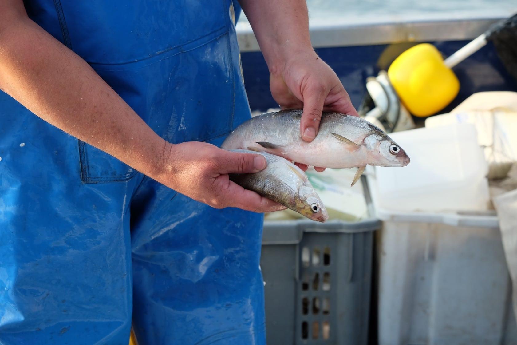 pesci-di-lago